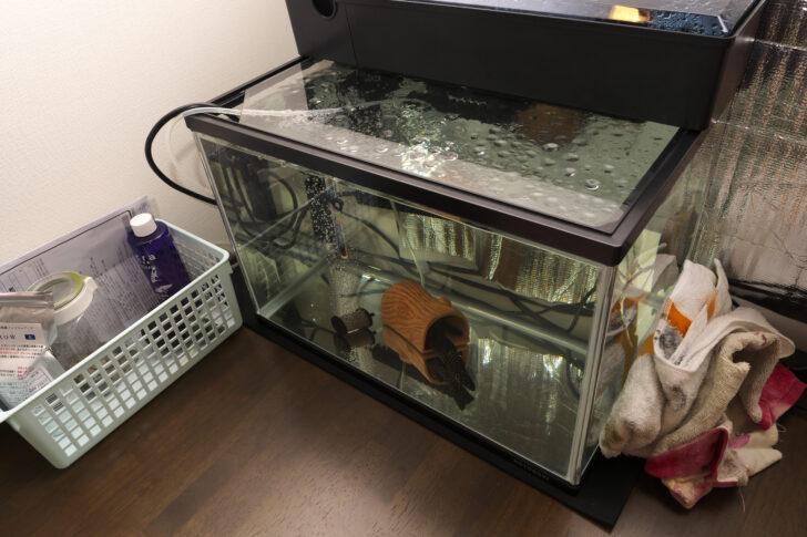 プレコ水槽45cm