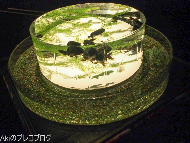 札幌アートアクアリウム