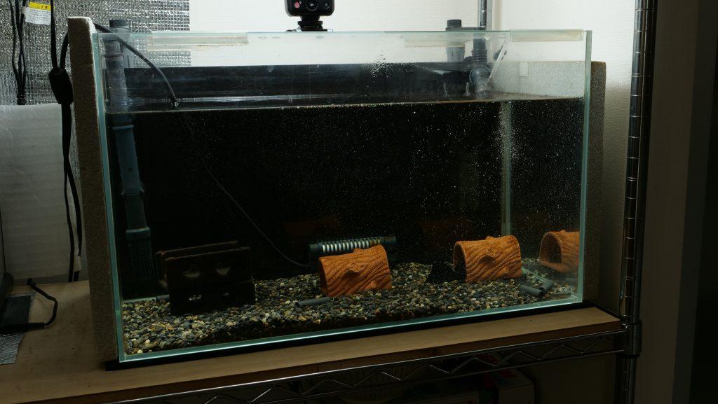 プレコ水槽60cm
