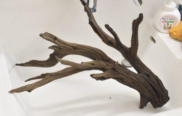 ゴーストウッド 流木