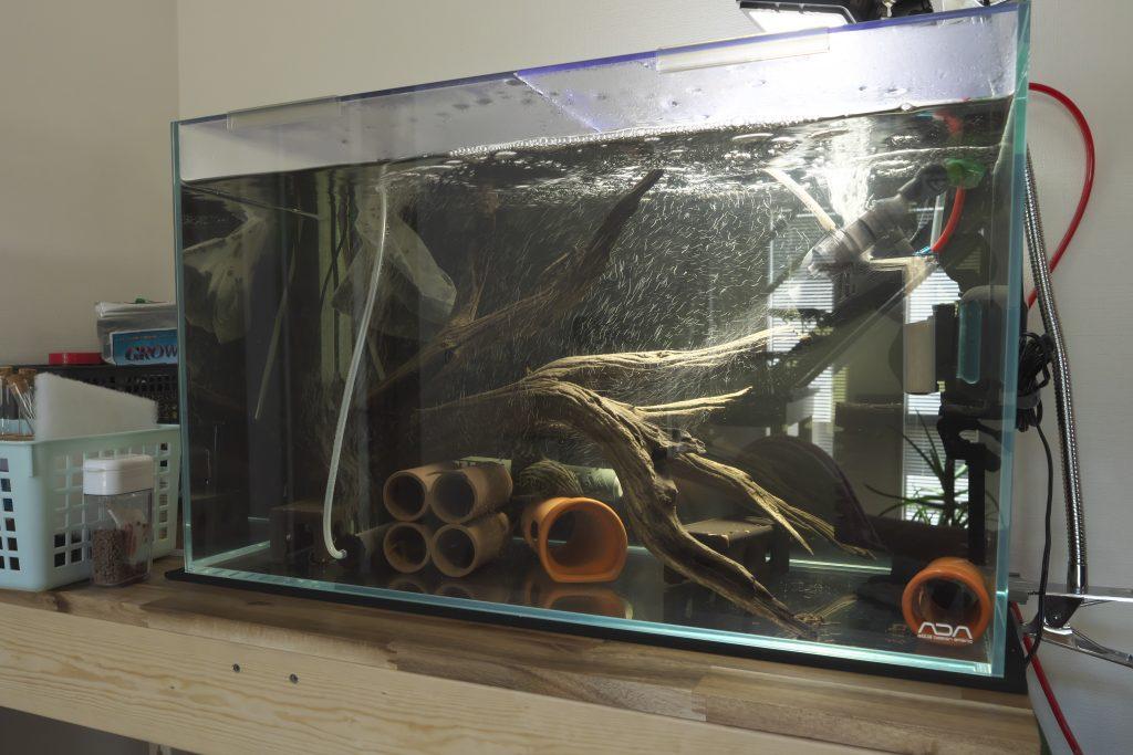 60cmプレコ水槽